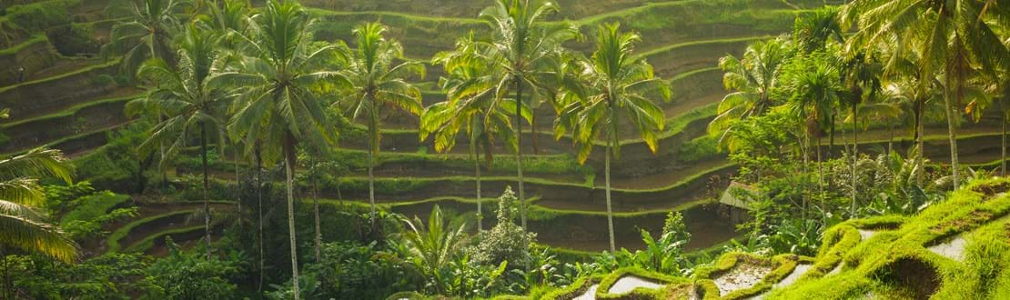 shutterstock_390855292 Beautiful rice terraces in the morning light near Tegallalang village, Ubud, Bali, Indonesia..jpg