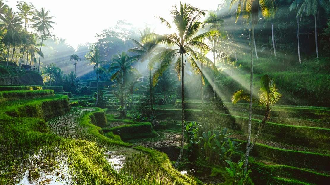 shutterstock_746605723 Bali Rice Terraces.jpg