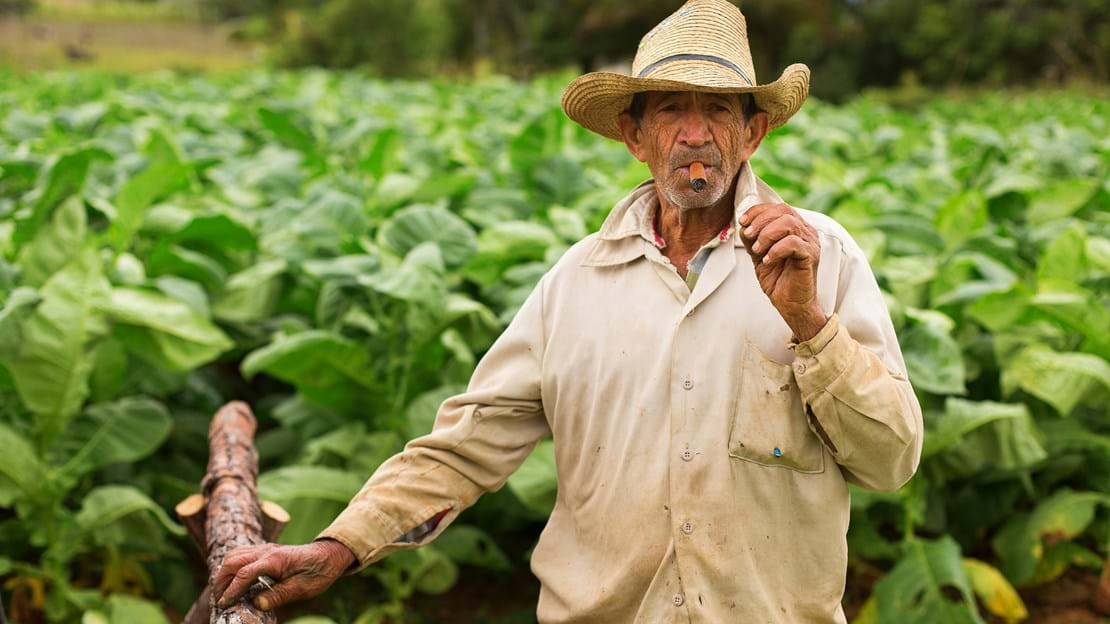 shutterstock_262730543 Unknown man working on tobacco field.jpg