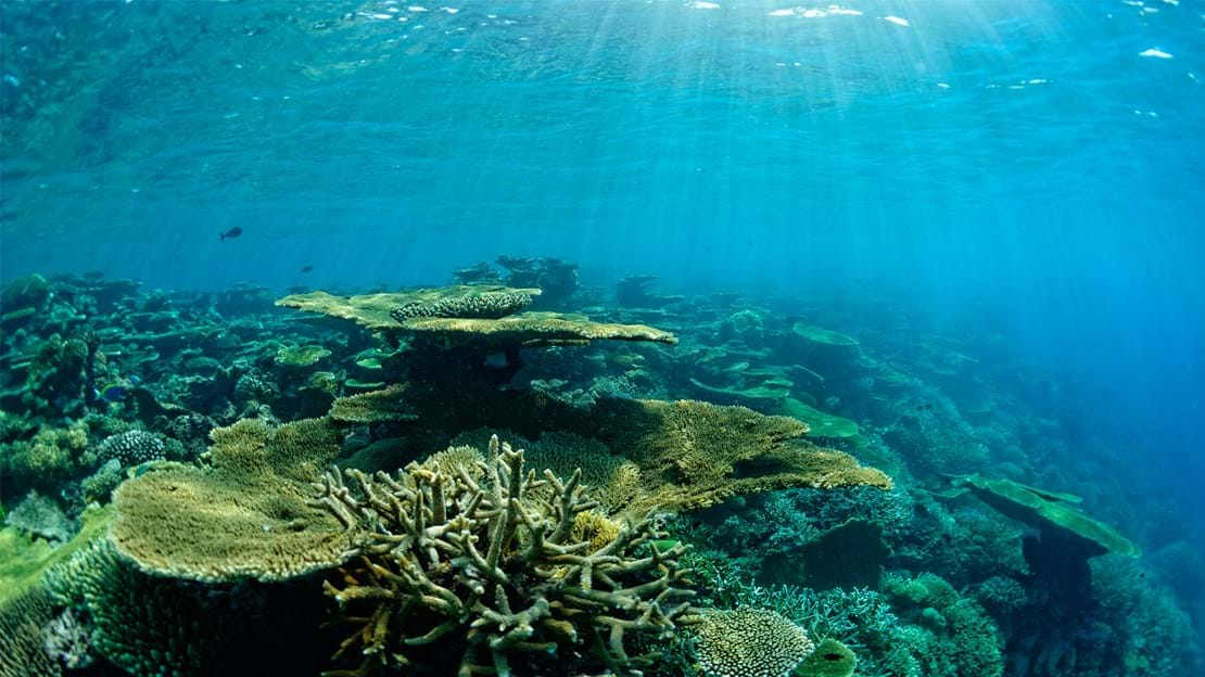 69168115-H1-Coral_reefs_outside_the_lagoon.jpg