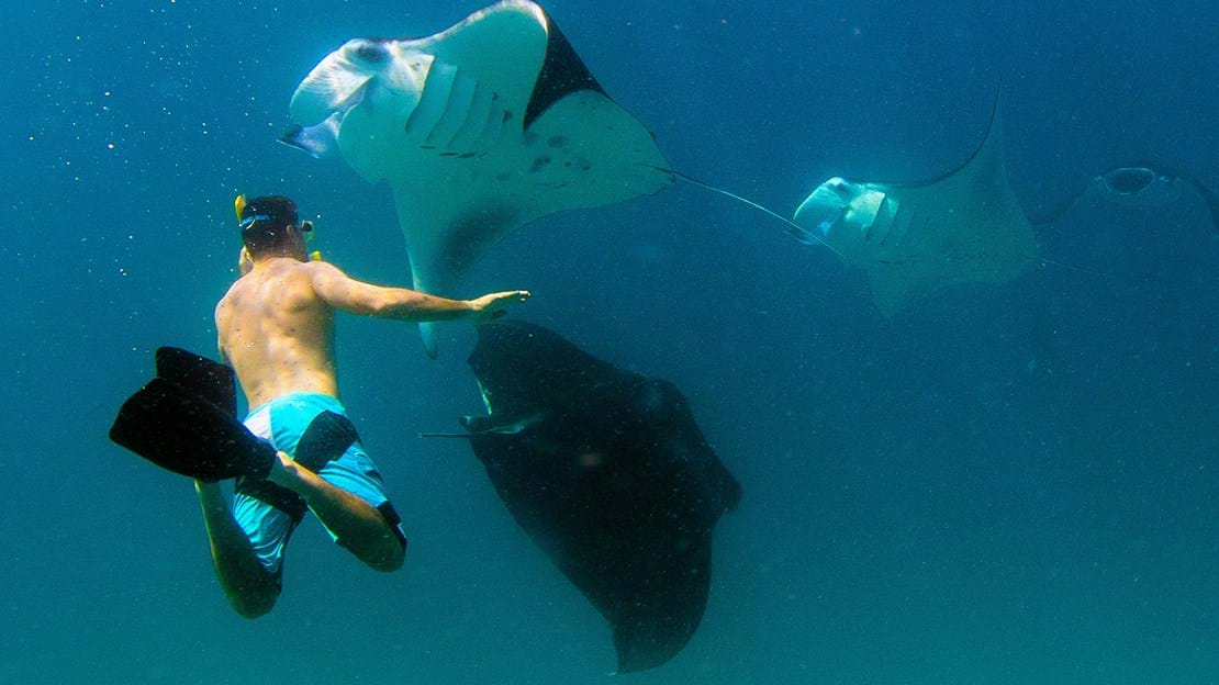 69178553-H1-Snorkelling_with_Manta_Rays.jpg