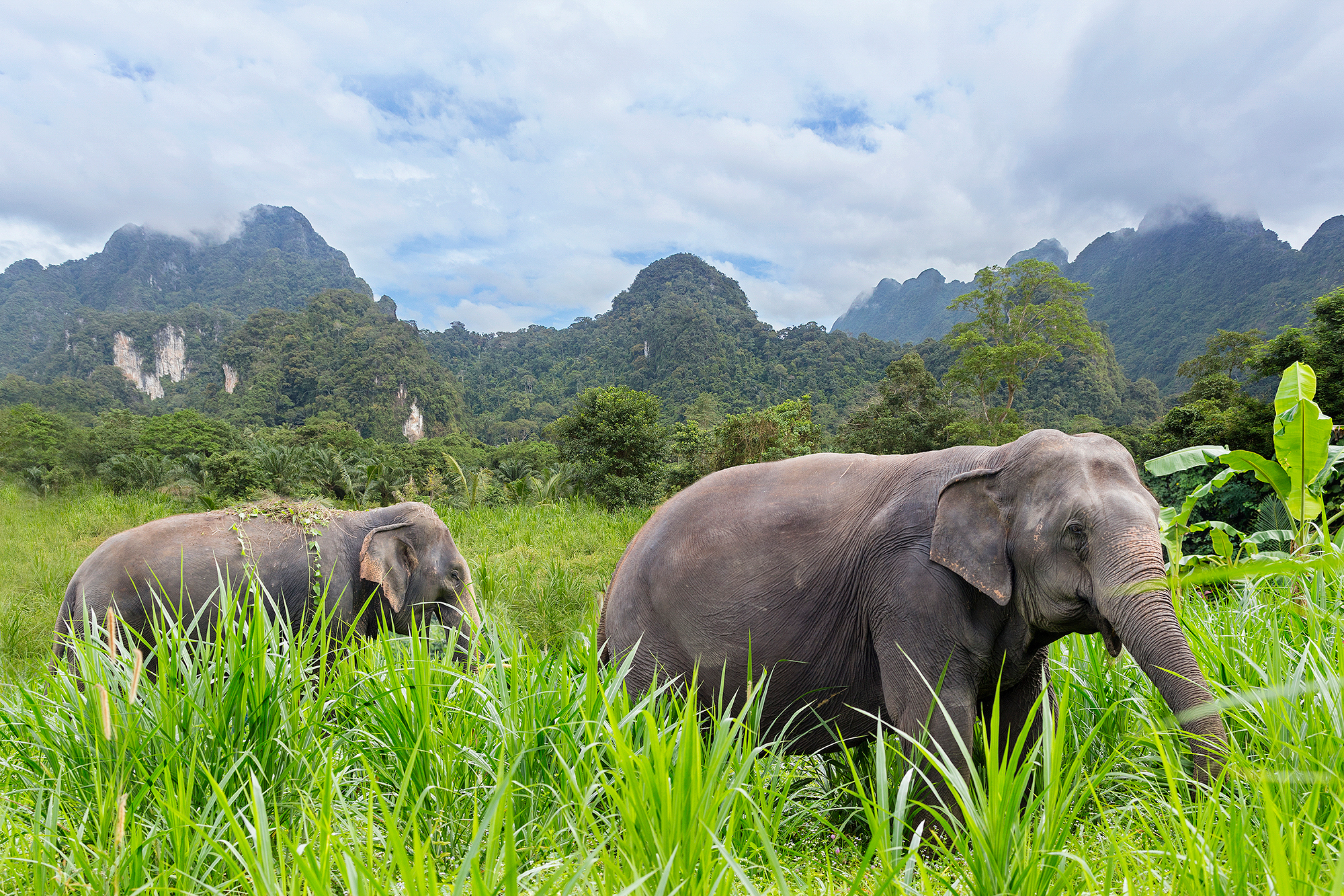 Elephant Hills, khao sok, rejser til thailand, check point travel
