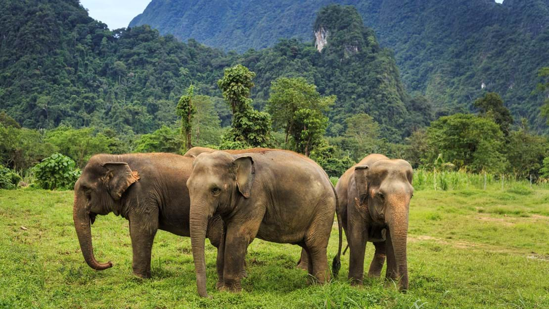 h10 Ethical Elephant Experience at Elephant Hills Luxury Tented Camp Khao Sok National Park Thailand - no Elephant Riding or Trekking.jpg