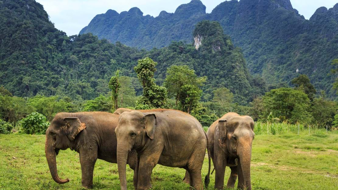 Elephant Experience at Elephant Hills Luxury Tented Camp Khao Sok National Park Thailand.jpg