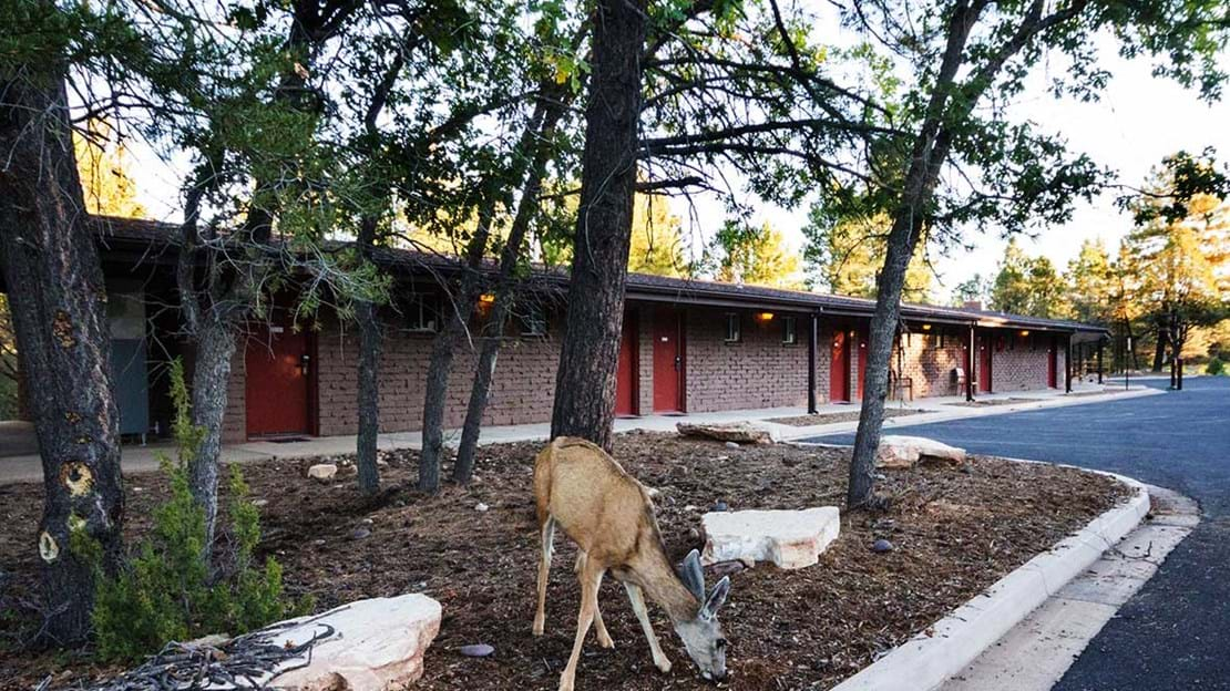 visitgrandcanyon-pg-yavapai-lodge-west-w-deer.jpg