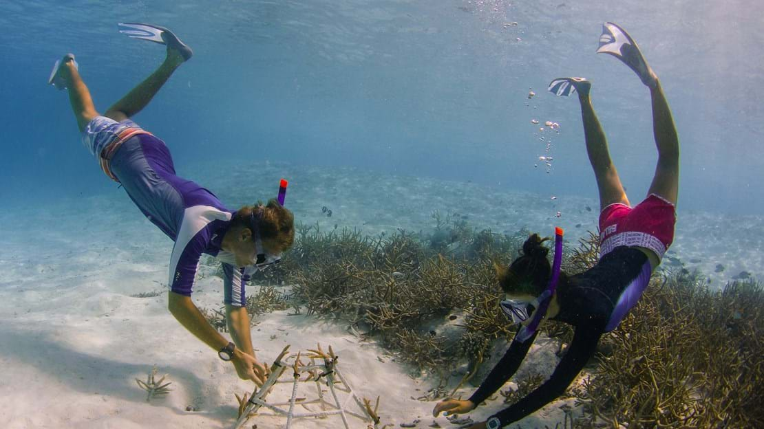 69168139-H1-Coral_adoption_with_a_marine_biologist.jpg